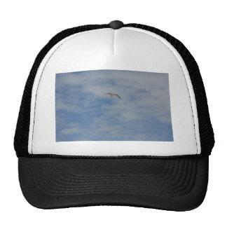 Moewe im Flug Mesh Hat
