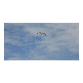 Moewe im Flug Photo Card