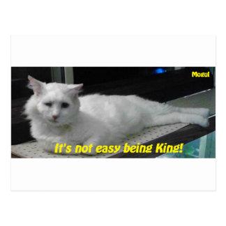 Mogul the King Postcard