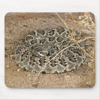Mohave Rattlesnake ~ Kimberly P-Chadwick Mouse Pads