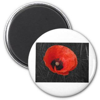 Mohnblume red poppy Photo Foto Magnet