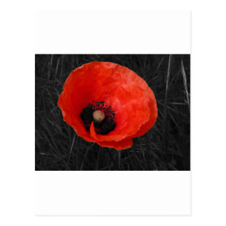 Mohnblume red poppy Photo Foto Postcard