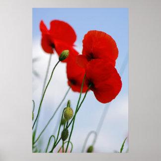 Mohnblüten rojos poster