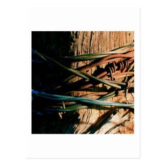 Moho y alambre de púas azul postal
