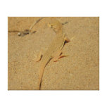 Mojave Fringe-Toed Lizard Desert Photography Canvas Print