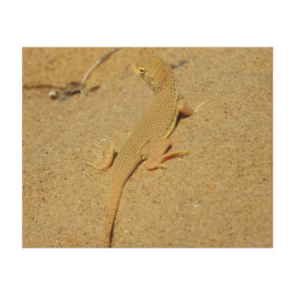 Mojave Fringe-Toed Lizard Desert Photography Canvas Print