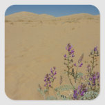 Mojave Indigo Bush and Kelso Dunes Square Sticker