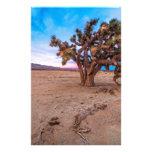 Mojave Joshua Tree Stationery