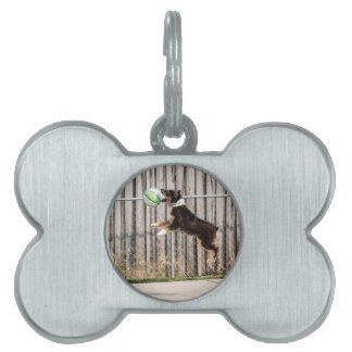 Mojo in Motion Pet ID Tag
