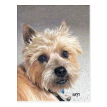 Mojón Terrier del oro Tarjeta Postal