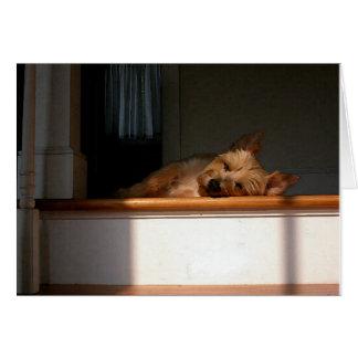 Mojón Terrier en tarjeta de felicitación en blanco