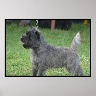 Mojón Terrier lindo Poster