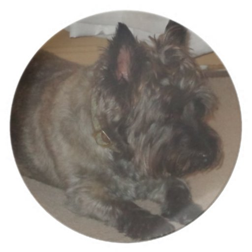 Mojón Terrier - placa Plato Para Fiesta