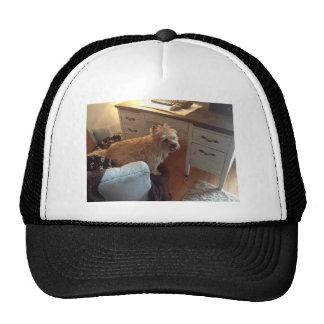 Mojón Terrier sonriente Gorro