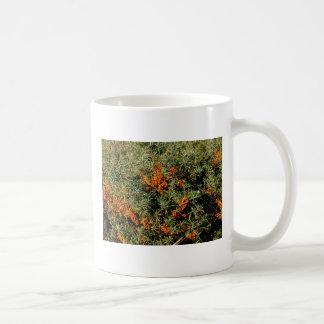 mok del duindoorn tazas de café