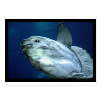 Mola 001 del Mola del Sunfish Postal