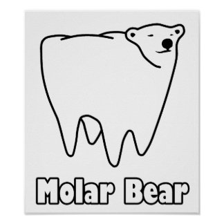 Molar Bear Polar Tooth Bear Poster