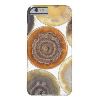 Mold culture barely there iPhone 6 case