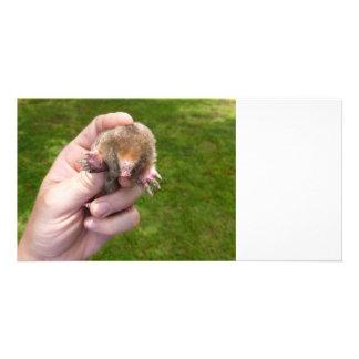 mole in hand against grass.jpg card