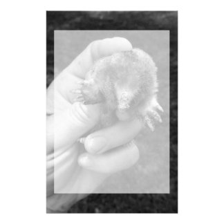 mole in hand bw against grass.jpg stationery