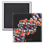 Molécula de la DNA. Modelo molecular de la DNA Imán