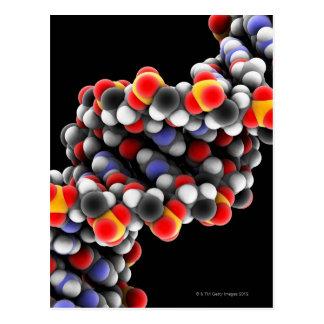 Molécula de la DNA. Modelo molecular de la DNA Postal