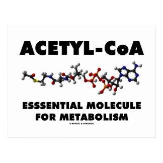 Molécula esencial Acetilo-CoA para el metabolismo Postal