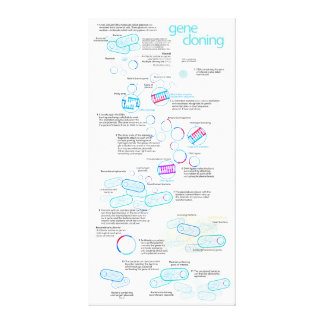 Molecular cloning using bacteria and plasmids canvas print