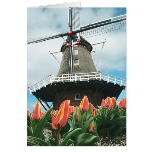 Molino de viento de los tulipanes de la primavera tarjetas