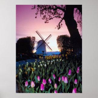 Molino de viento holandés en la puesta del sol en póster