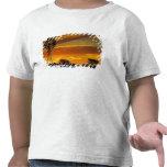 Molino de viento y puesta del sol, cala de camiseta