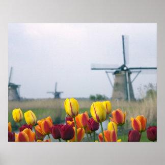 Molinoes de viento y tulipanes a lo largo del cana póster