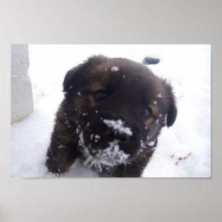 Mollete el perro de la nieve póster