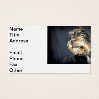 Molli Business Card