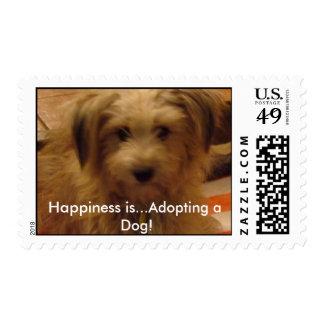 ¡mollie_020a felicidad… está adoptando un perro