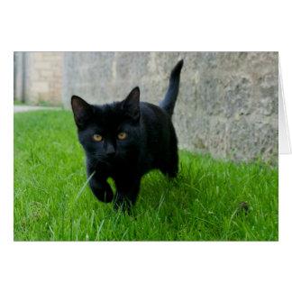 Mollie, kitten on Markenfield Farm Card
