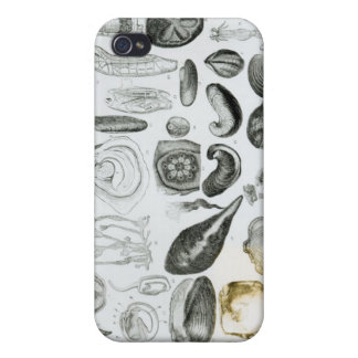 Molluscs iPhone 4/4S Covers