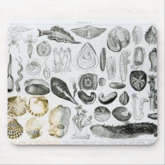 Molluscs Mouse Pad