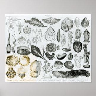 Molluscs Poster
