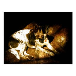 Molly Dog Postcard