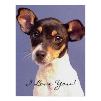 Molly - I Love You! Postcard