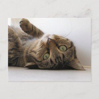 Molly postcard