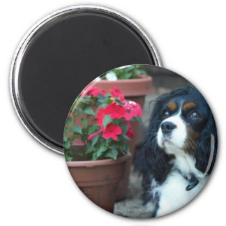 Molly the Cavalier Magnet