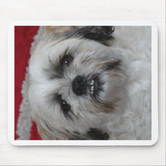Molly the Maltese Mouse Pad