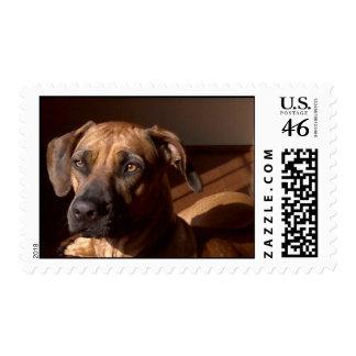 Mollyinwindow Postage Stamps
