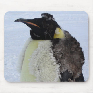 Molting Emperor Penguin Mouse Pad