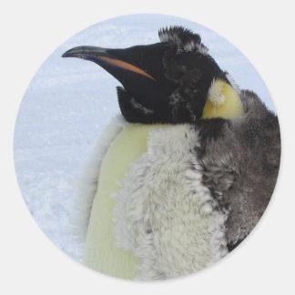 Molting Emperor Penguin Sticker