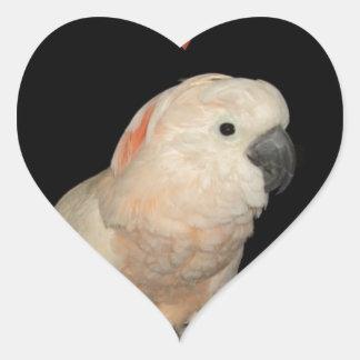 Moluccan Cockatoo Love Valentine Design Heart Sticker