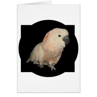 Moluccan Cockatoo Parrot Design Card