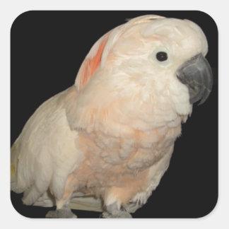 Moluccan Cockatoo Parrot Design Square Stickers